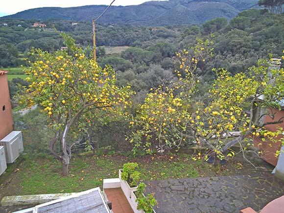 Limonaie Elba Residence (Isola d'Elba)